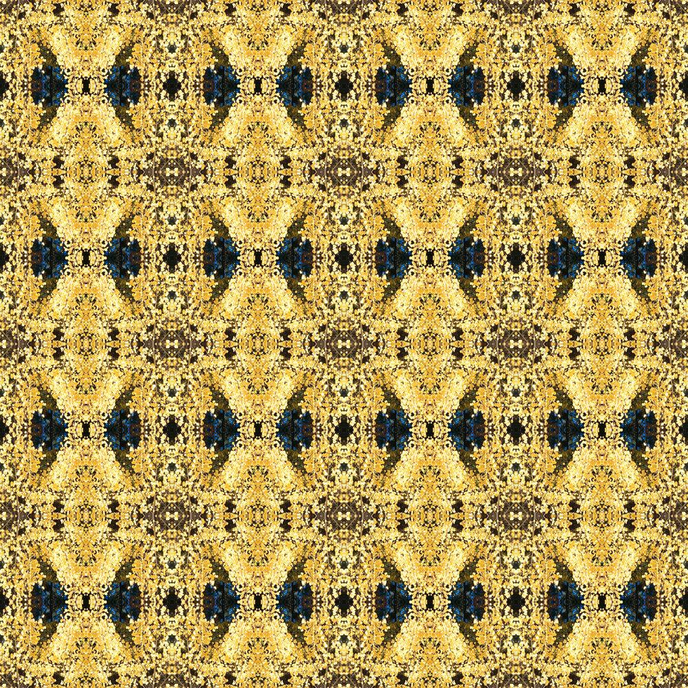 yellow aspen x8.jpg