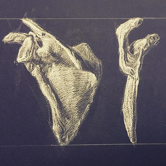 Scapula study #figuredrawing #drawing #lifedrawing #anaotomy#artistsnetwork