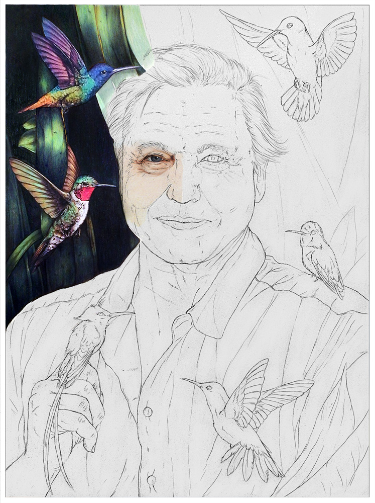 Attenborough-Animation-10.jpg
