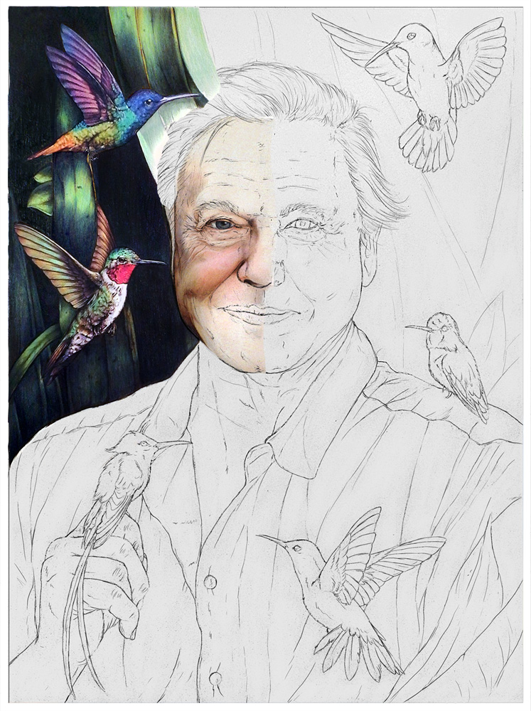 Attenborough-Animation-11.jpg