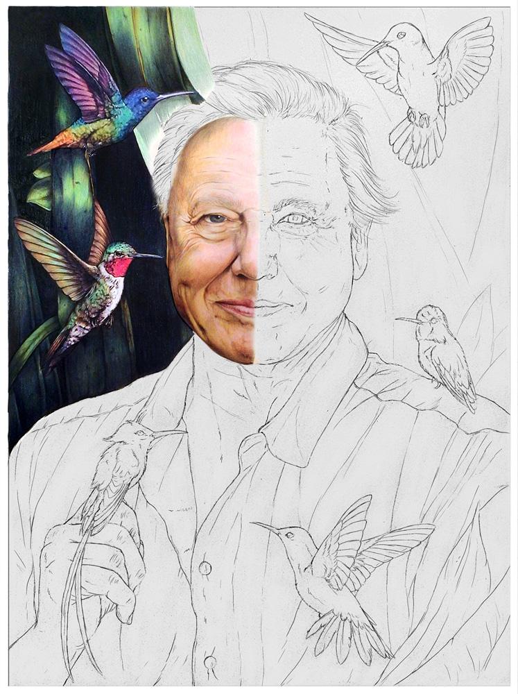Attenborough-Animation-12.jpg