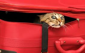 Cat in a Red Suitcase