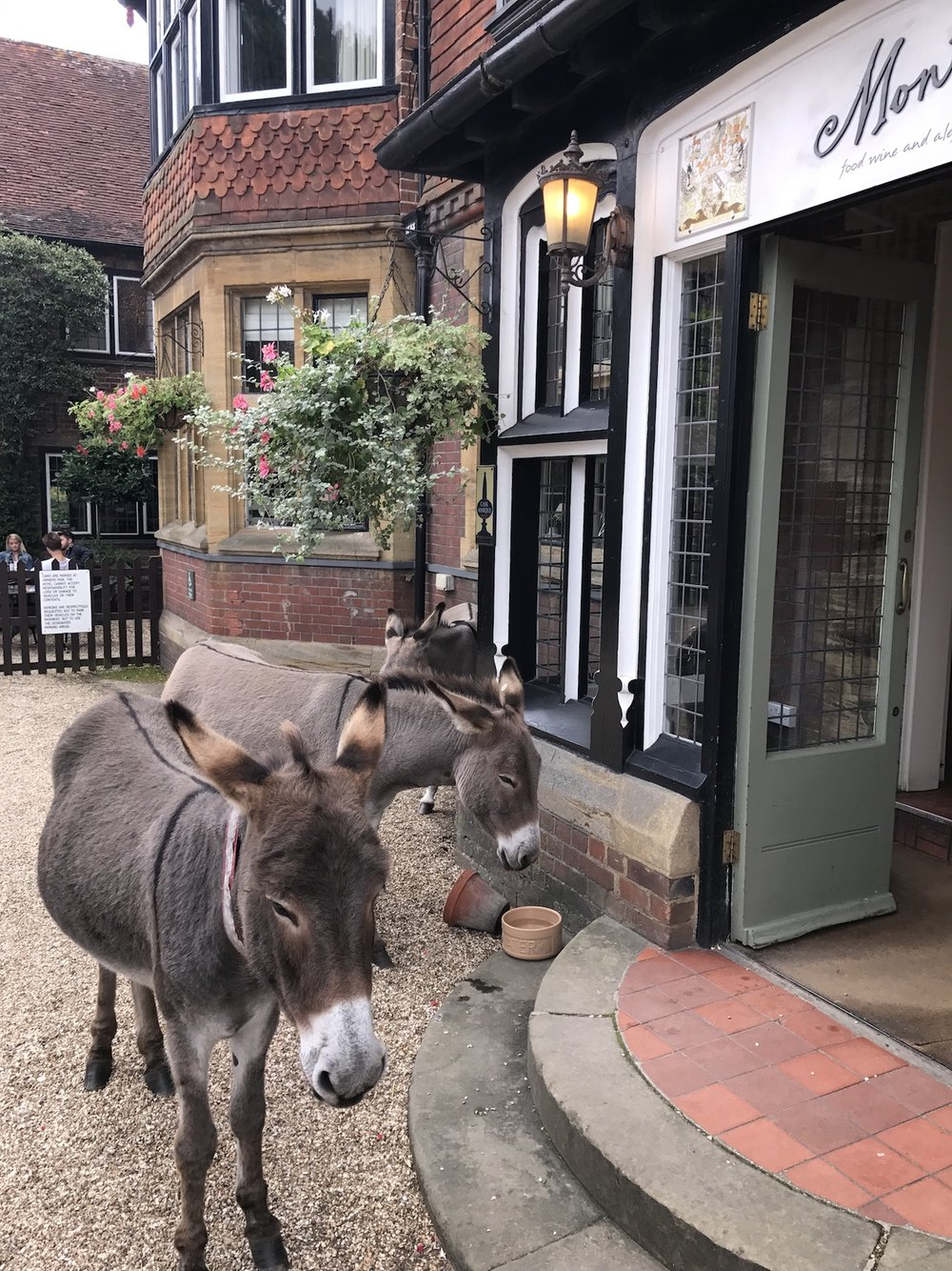 Click here to see video of the donkeys jamming up the streets .