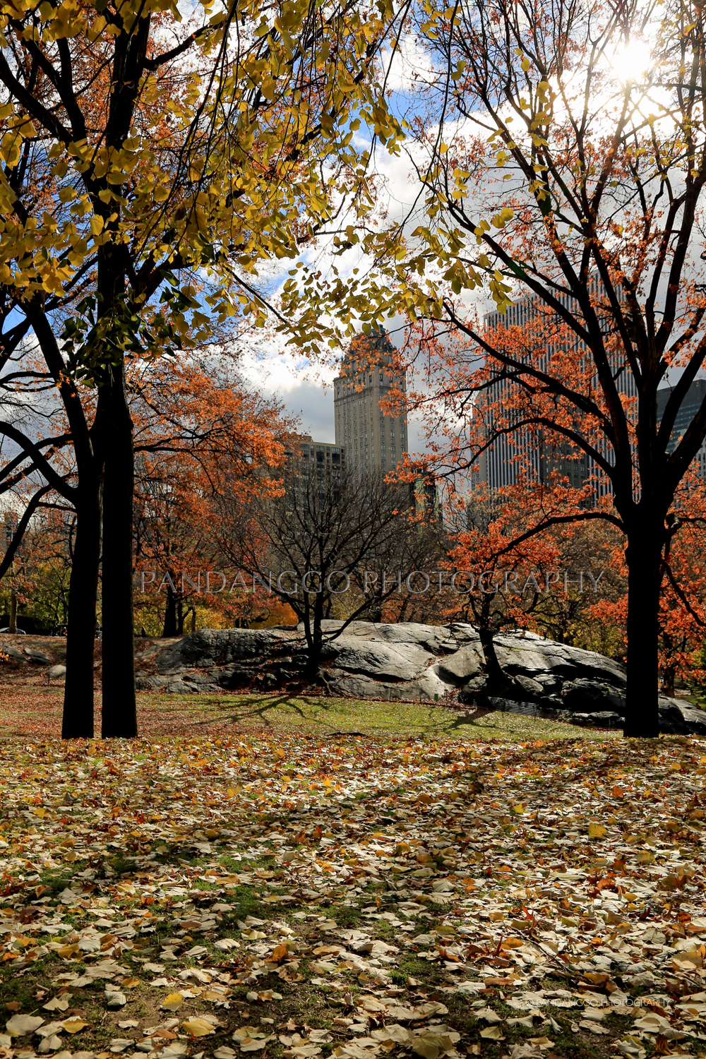 fall-shade-central-park-new-york-city.jpg
