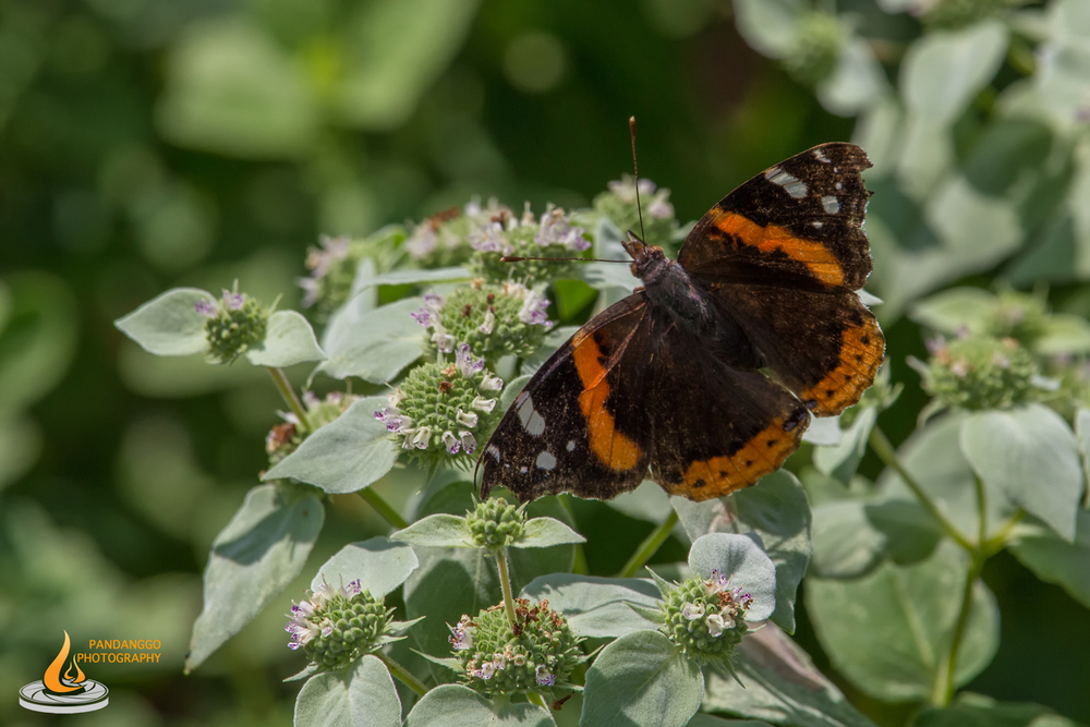 Palmyra-Nature-Cove-Park-Butterflies-07.jpg