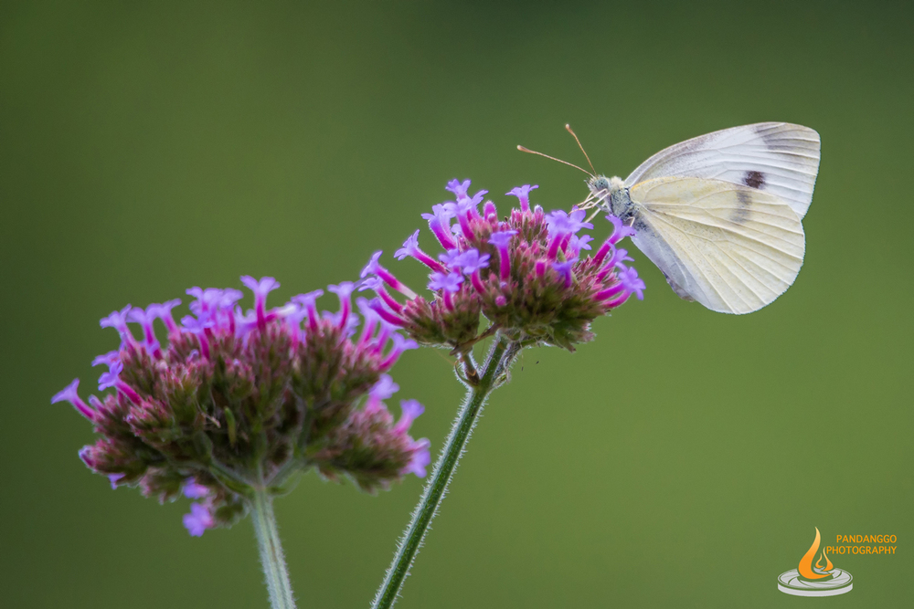 Palmyra-Nature-Cove-Park-Butterflies-03.jpg