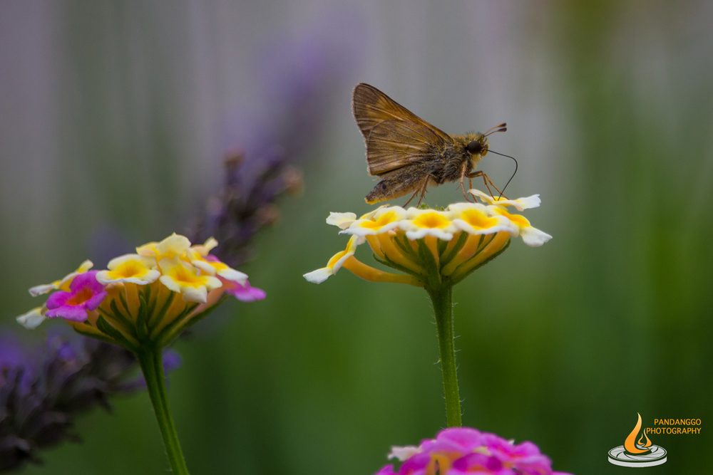 Palmyra-Nature-Cove-Park-Butterflies-02.jpg
