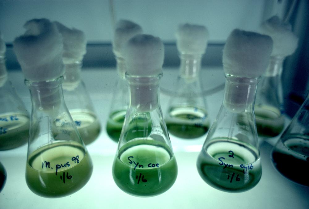 CSIRO_ScienceImage_2881_Algae_Cultures_in_Laboratory.jpg