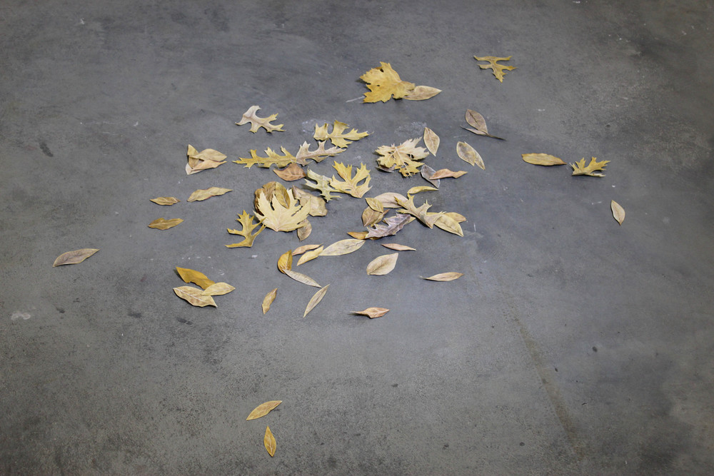 Untitled (Pile of Leaves), 2015