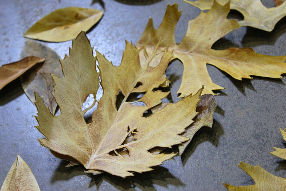 Untitled (Pile of Leaves)