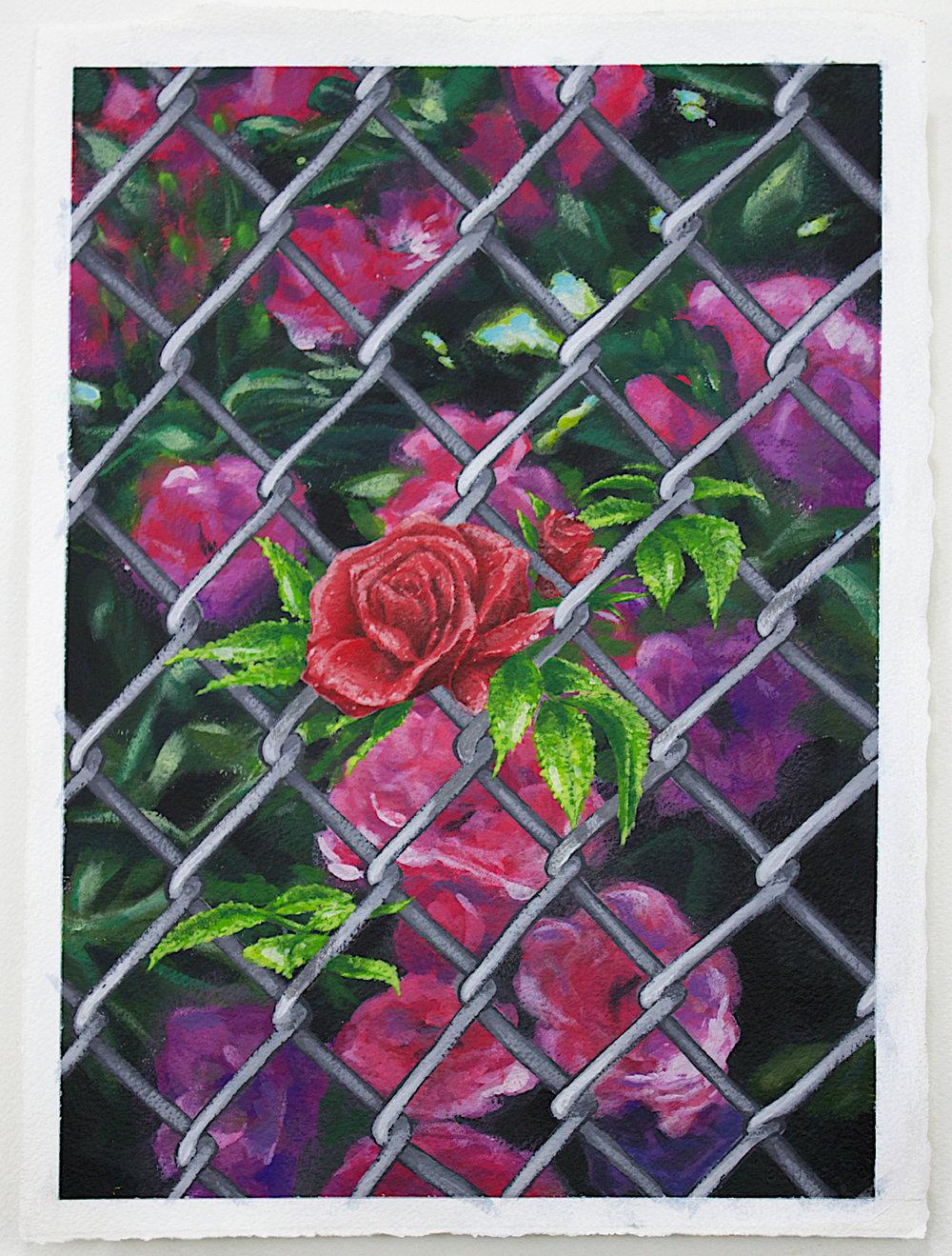 Rose Garden, 2018