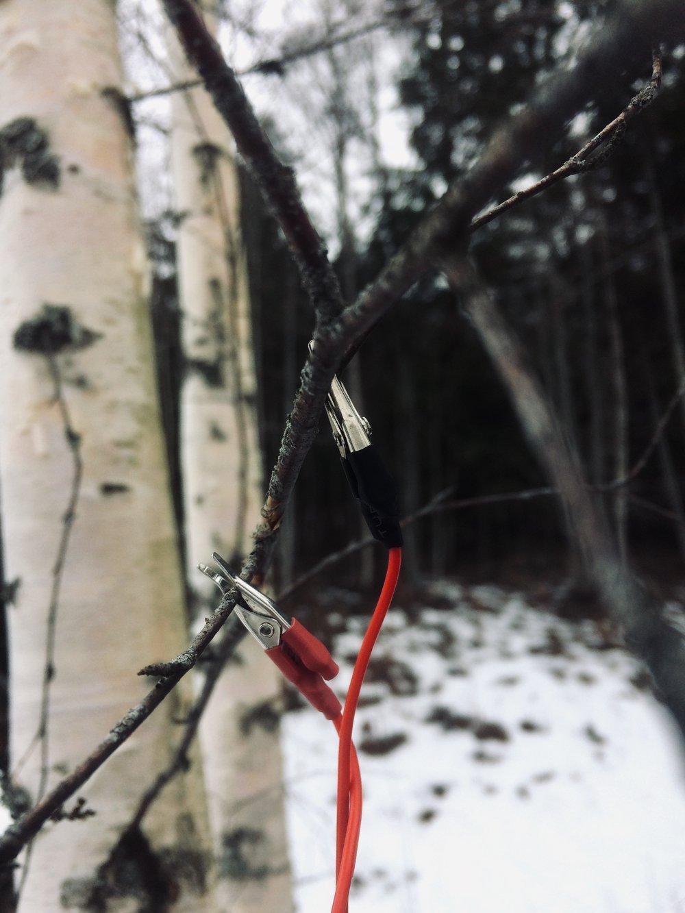 Lerin Hystad Vinter Bjork.jpg