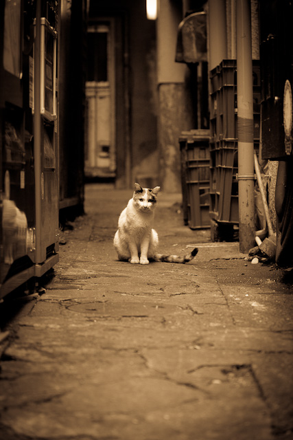 Cat_in_alley