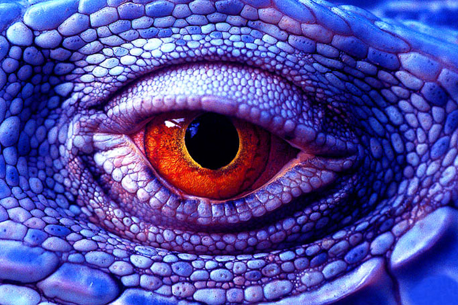 Lizzard's Eye by Bryan Peterson