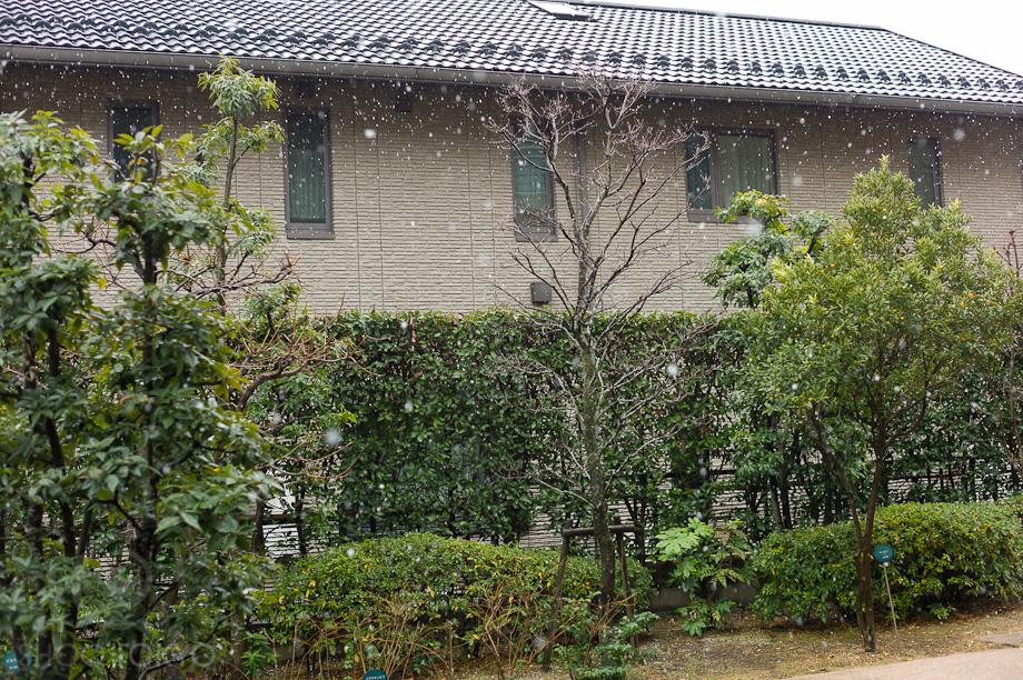 Snowing_in_Tokyo_4