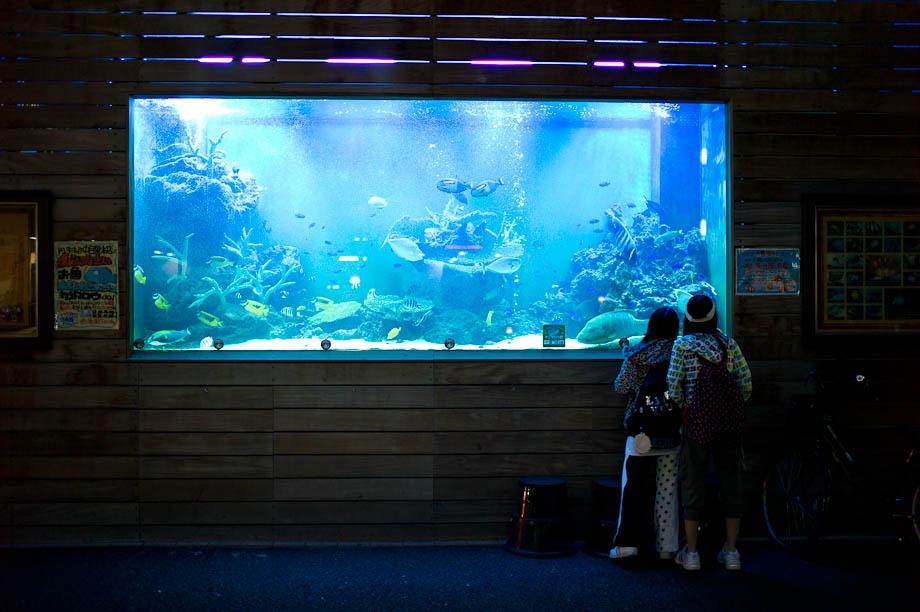 Don Quijote's Giant Fish Tank in Nakameguro, Tokyo, Japan