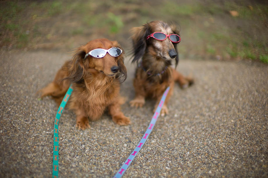 Dogs with sunglasses on.