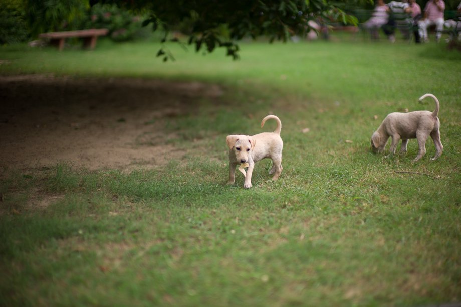 Puppies in New Delhi