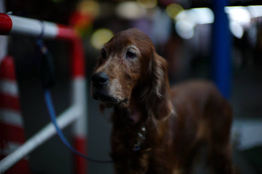 Dog in Shinjuku