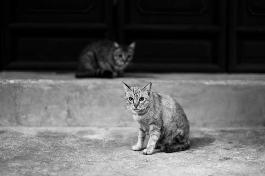 Alley Cats in Bangkok