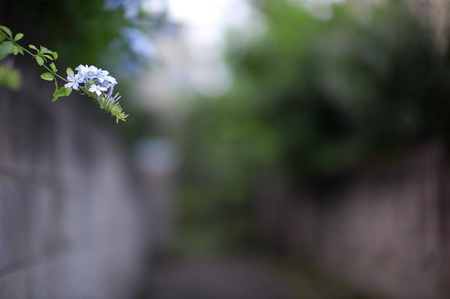 Flowers in Jiyugaoka