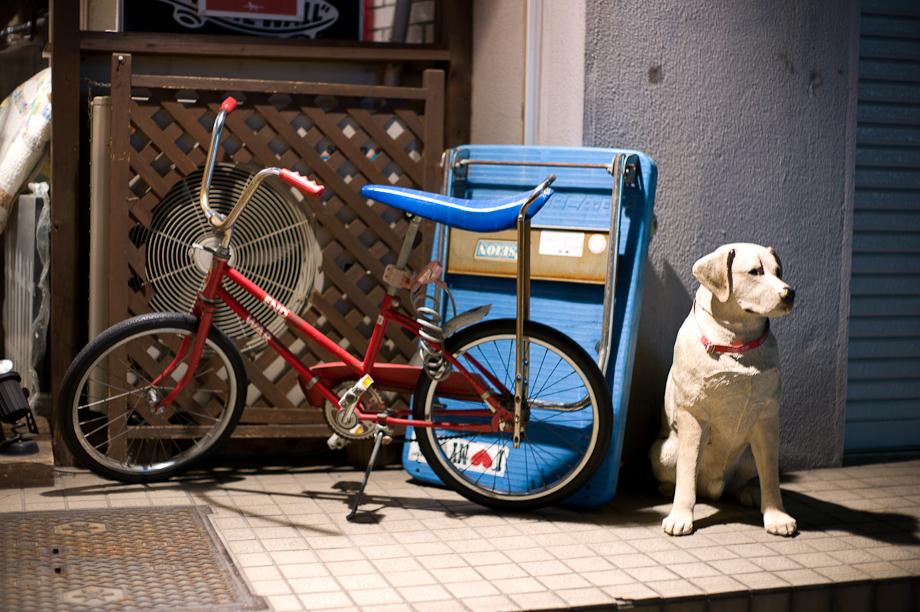 Bike and a dog