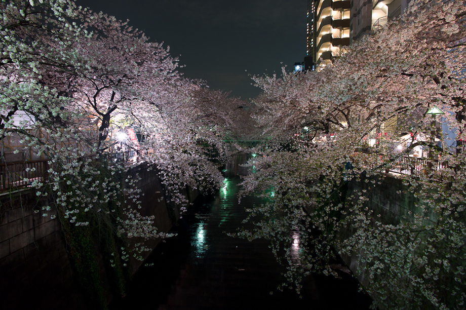 Cherry Blossoms in Nakameguro at Night