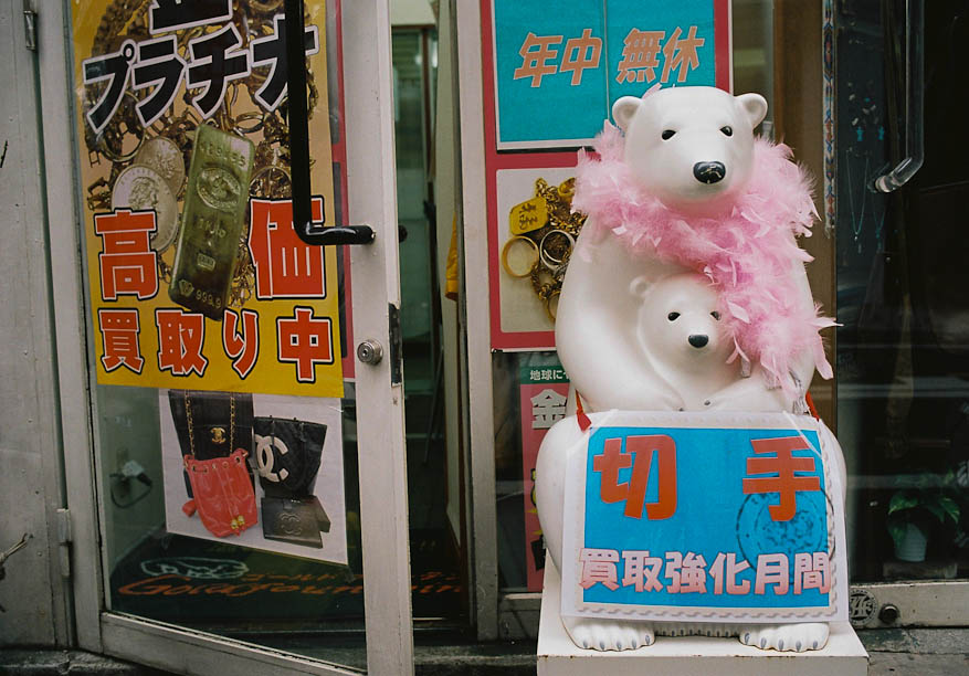 Polar Bear in a pink boa