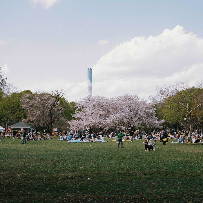 Ohanami at Kinuta Park