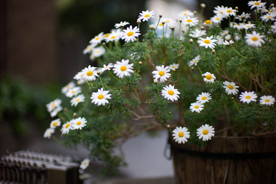 Flower in Tokyo