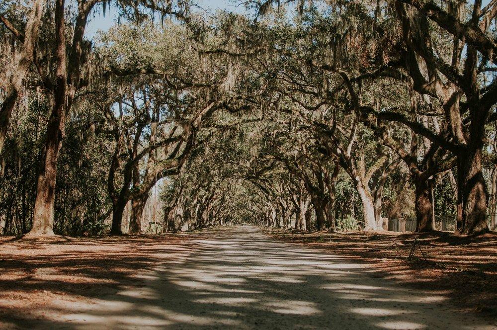 Oak Lined Lane (C).jpg
