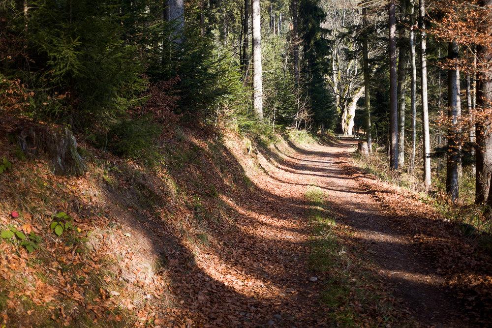 Waldlehrpfad Heiligenschwendi
