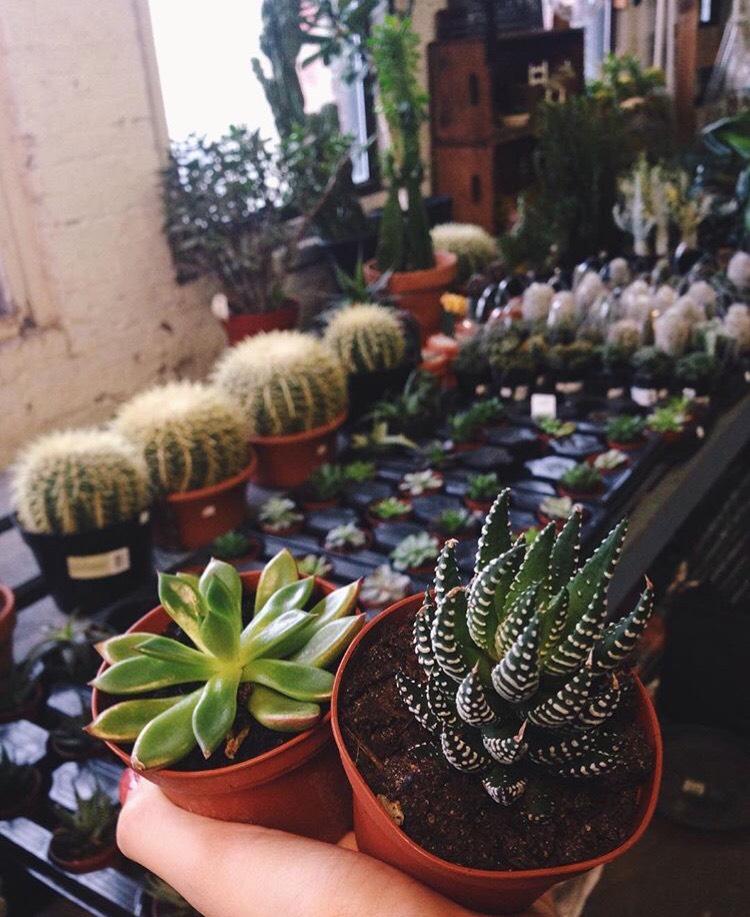 Ricky's Flower Market