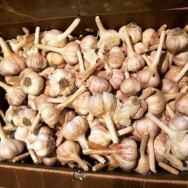 Assawaga_garlic.jpg