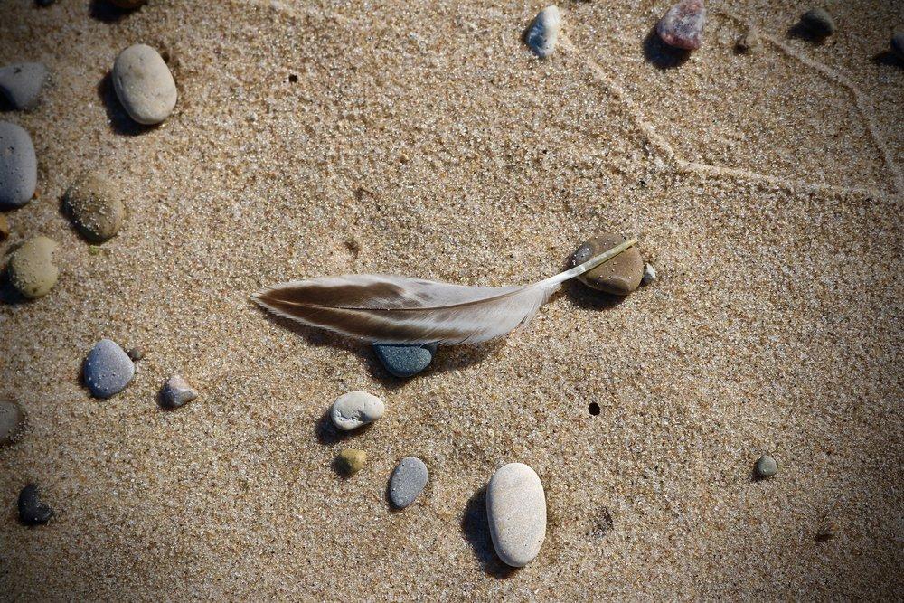 Gull Feather / Lake Superior, Michigan, USA