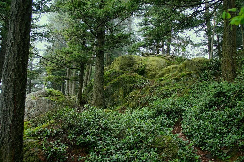 Puget Sound, Washington, USA