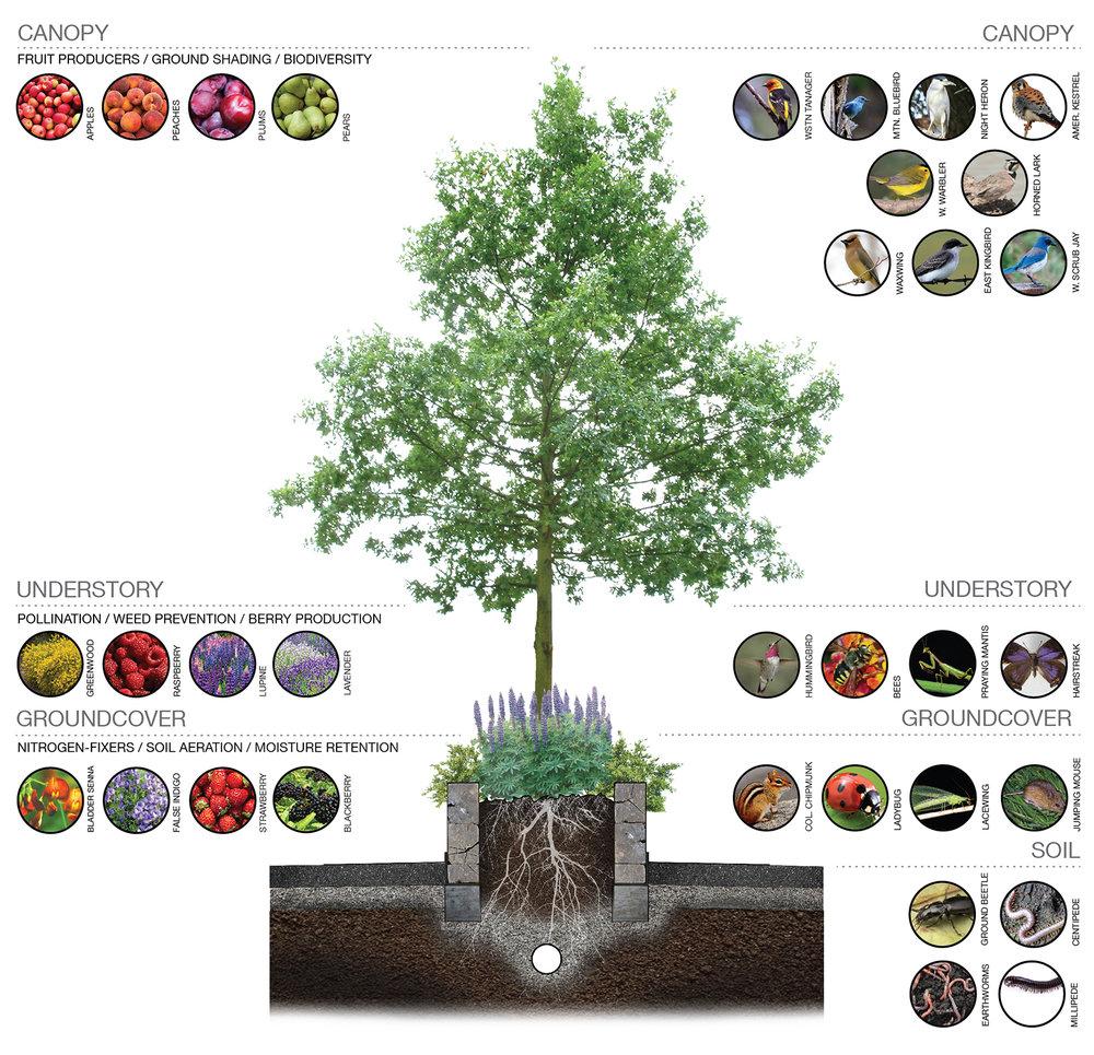 masonstreet_ecology.jpg