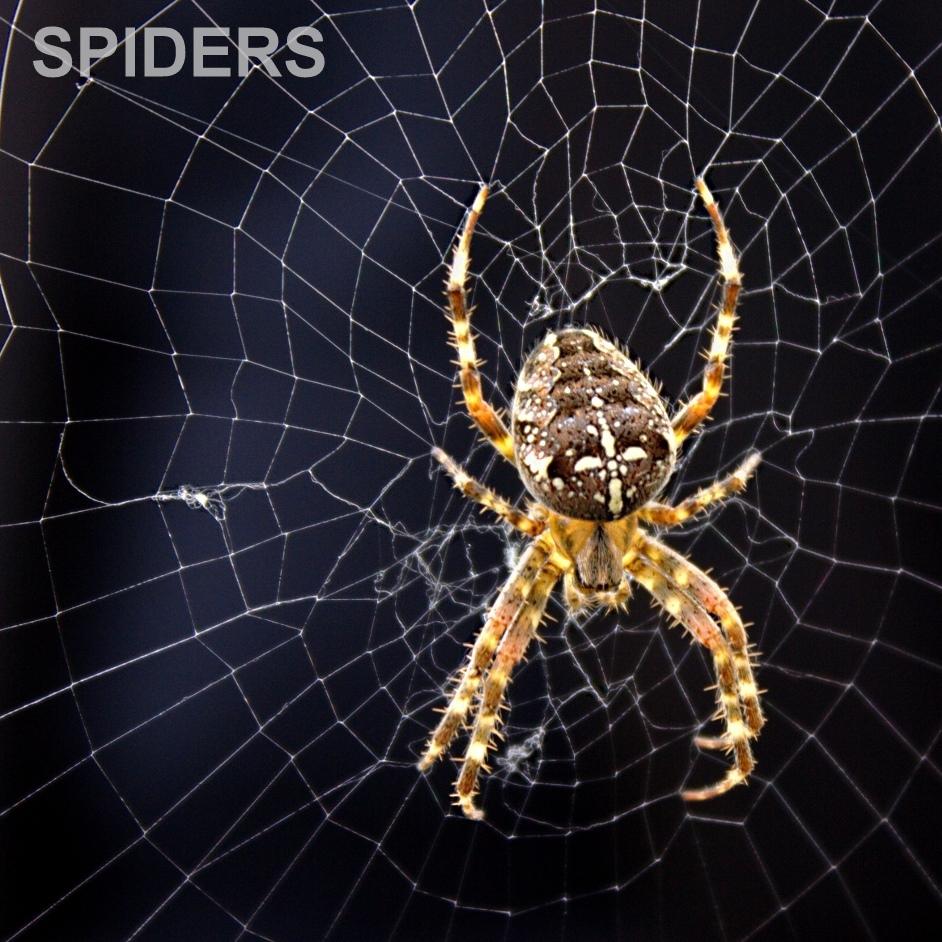 SPIDERS.jpg