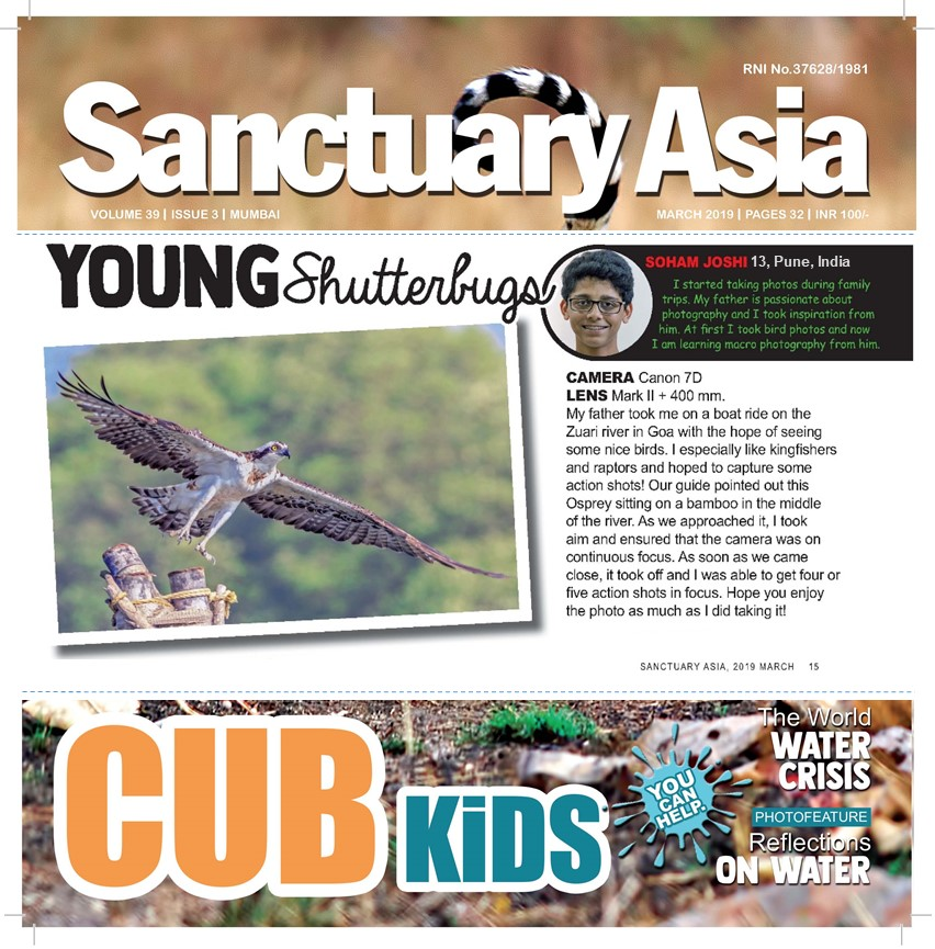 Soham_Sanctuary_Asia_Mar_19_osprey.jpg