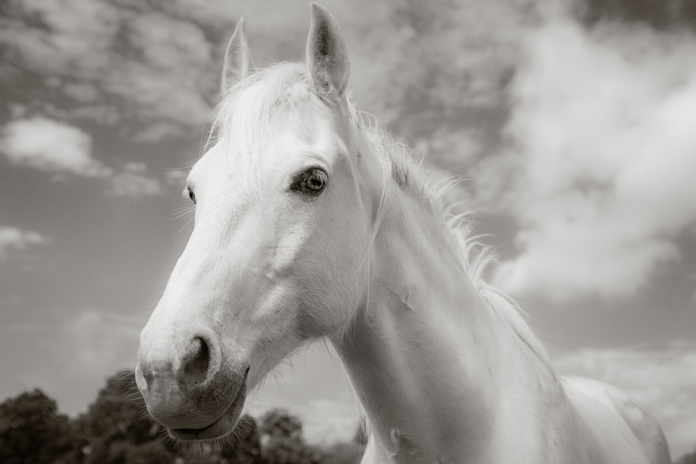 RSmith_Horse__3151BWInf_2500.jpg