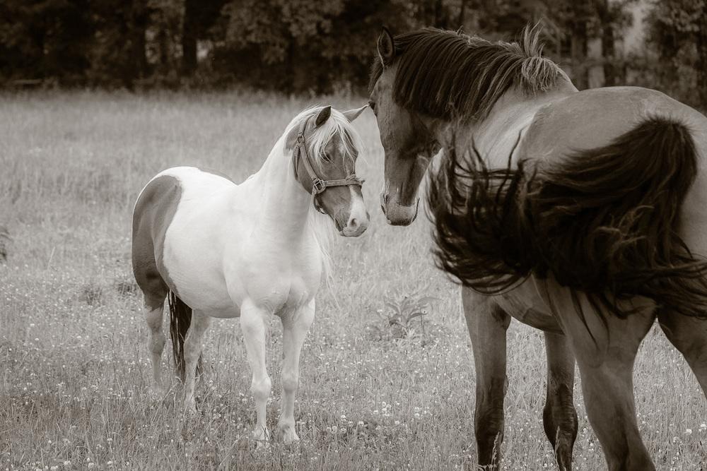 RSmith_Horse_3246BWInf_2500.jpg