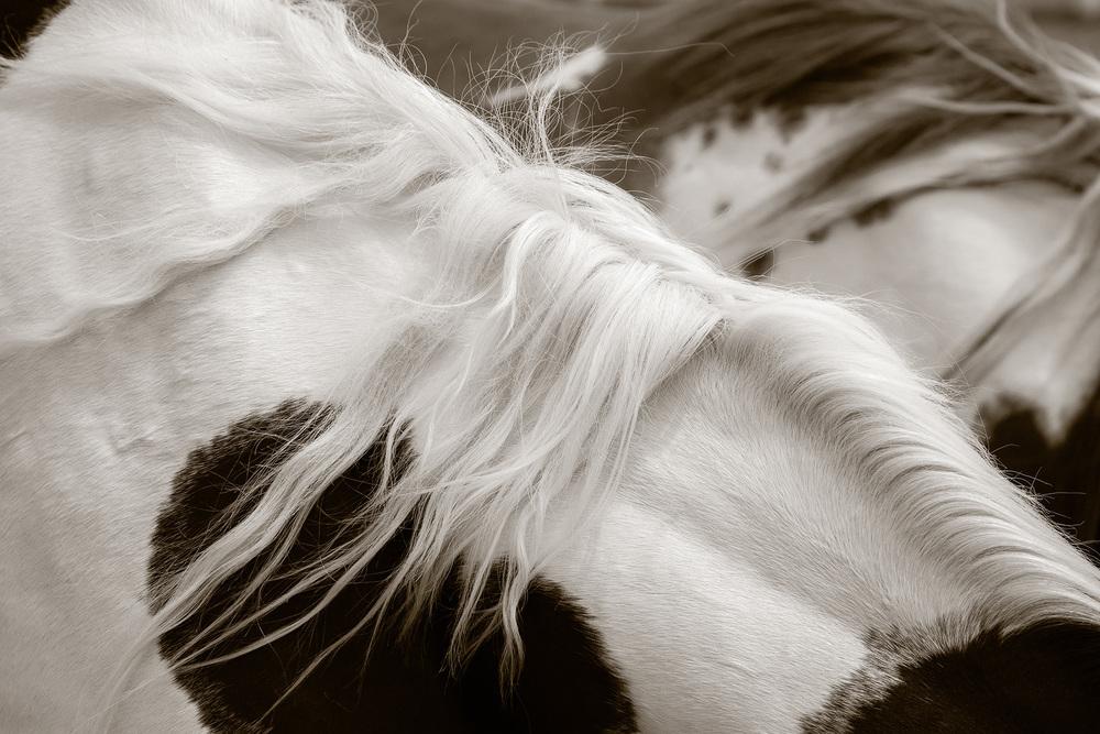 RSmith_Horse_3258BWInf_2500.jpg