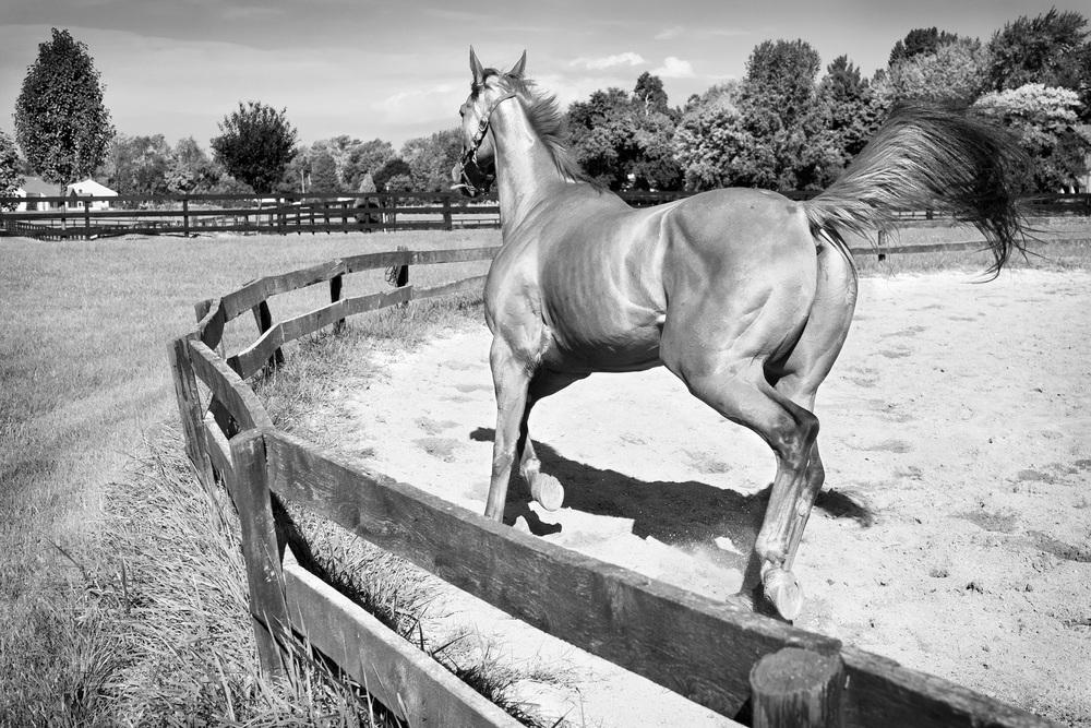 RSmith_HorseSport-3511BW_2500.jpg