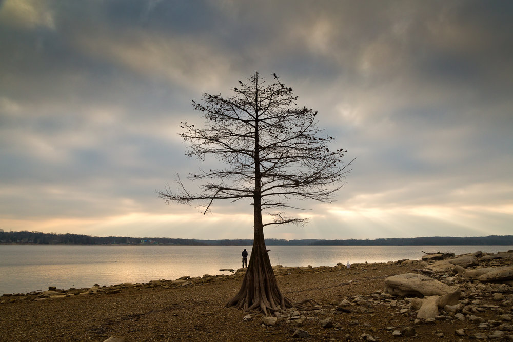 Lone Cypress, J. Percy Priest Lake, Nashville, Tennessee.