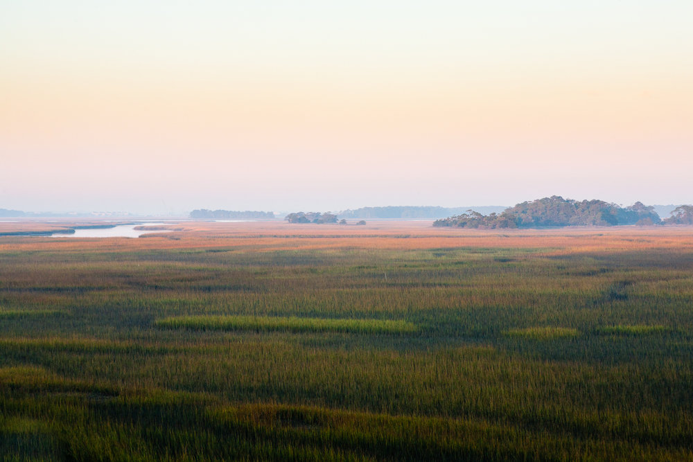 Wetlands, Folly Island, South Carolina.
