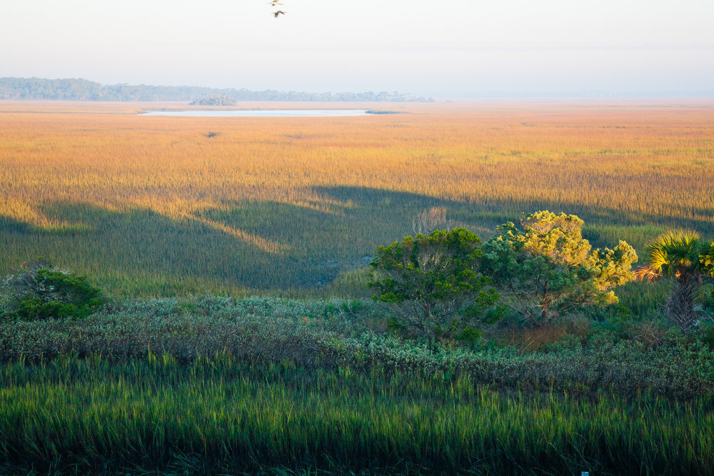 Tidal wetlands, Folly Island, South Carolina.
