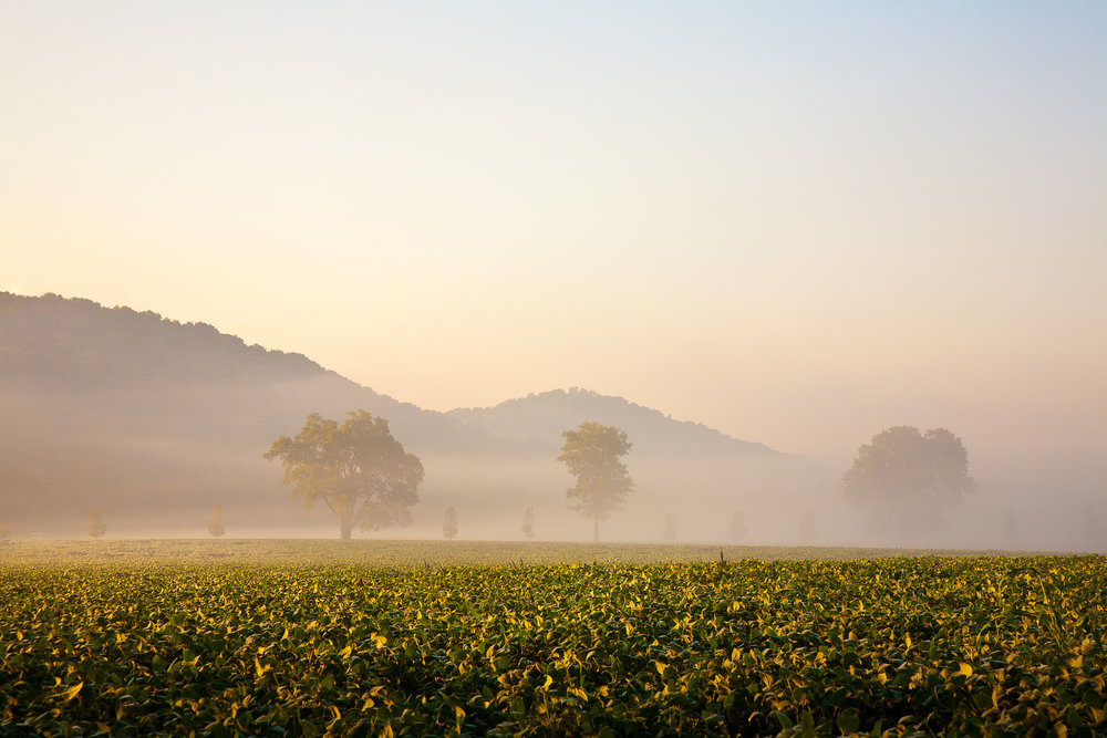 Morning light and fog, Franklin, Tennessee.