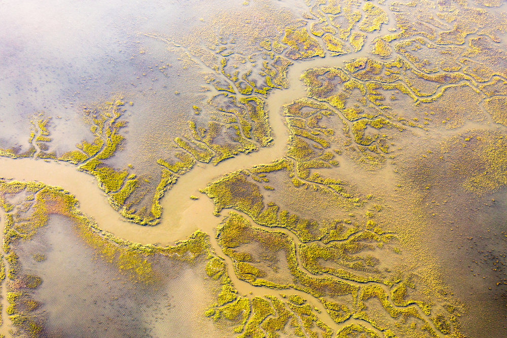 Estuary abstract, South Carolina Lowcountry.