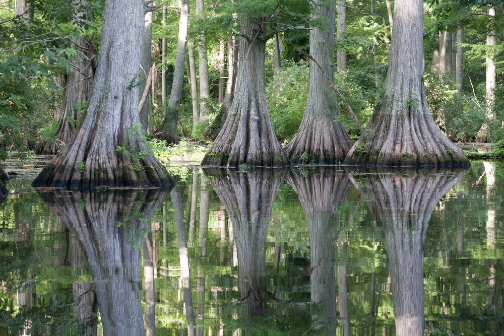 Reelfoot Lake, northwest Tennessee.