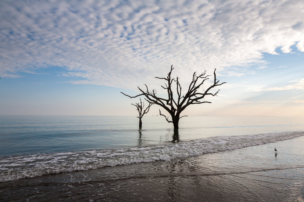 Boneyard beach, Edisto Island, South Carolina.